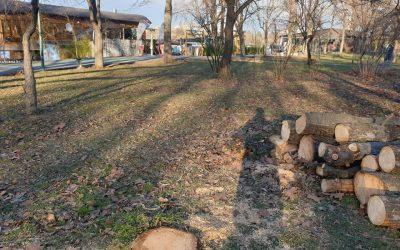 Cum pot cetățenii să sesizeze tăierile nelegale de arbori din parcuri