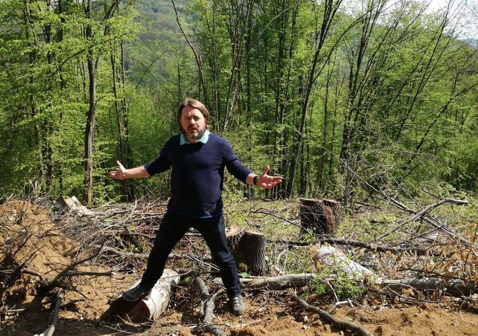 Victorie USR în Senat pentru stoparea tăierilor ilegale de păduri